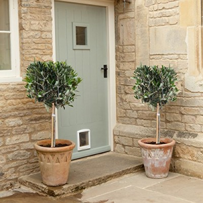 Pair-of-Hardy-Standard-Olive-Tree-Set-of-2-1-tall-0