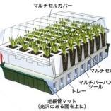 Self-Watering-Propagator-0-0