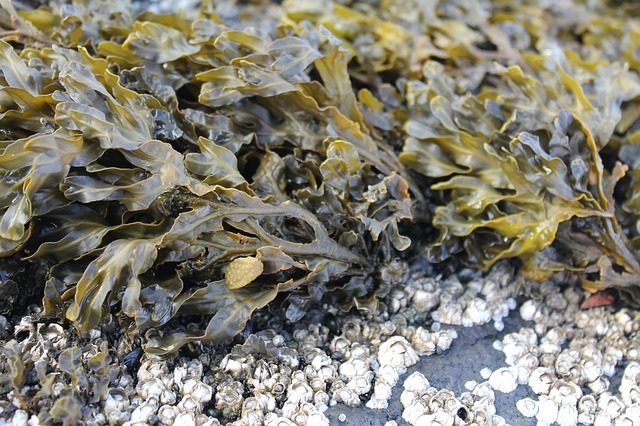 Organic Seaweed to improve Plant Development